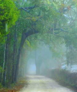 Misty Forest Morning. Pic from wunderground.com